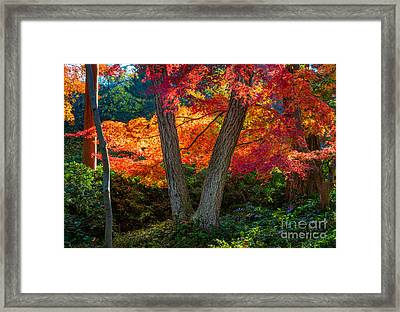 Japanese Garden Grove Framed Print by Inge Johnsson
