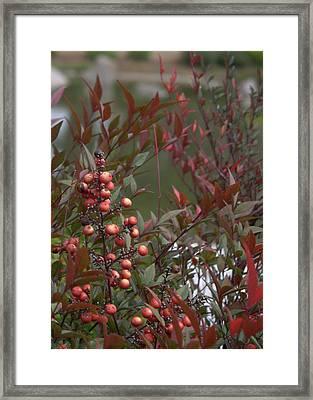 Japanese Garden Plants Framed Print