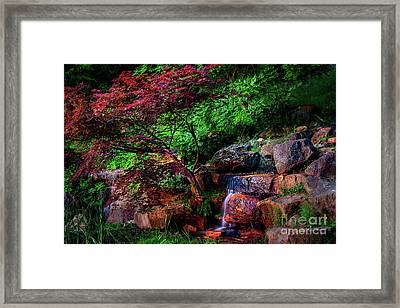 Japanese Maple At Honor Heights Park Framed Print by Tamyra Ayles