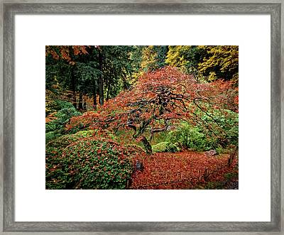 Framed Print featuring the photograph Japanese Maple At The Japanese Gardens Portland by Thom Zehrfeld