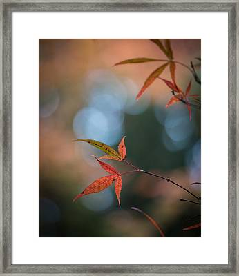 Japanese Maple Leaves Meditation Framed Print by Mike Reid