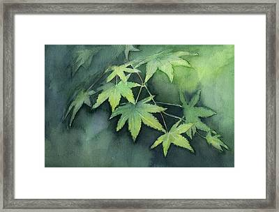 Japanese Maple  Framed Print by Olga Shvartsur
