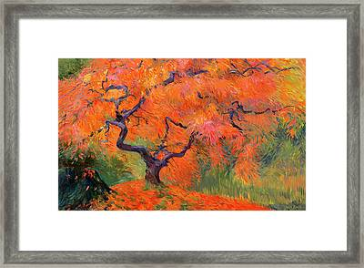 Japanese Maple Tree Framed Print by Judith Barath