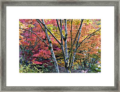 Japanese Maples In Full Color Framed Print