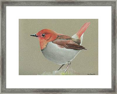 Framed Print featuring the drawing Japanese Robin by Gary Stamp