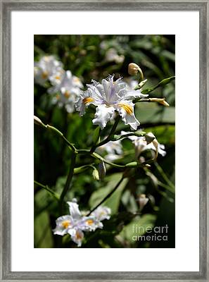 Japanese Roof Iris Framed Print