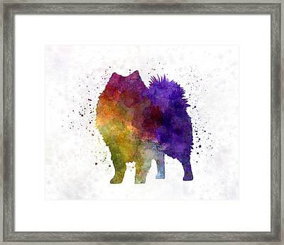 Japanese Spitz In Watercolor Framed Print by Pablo Romero
