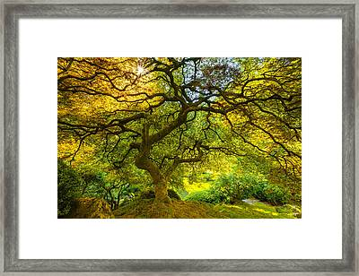 Japanese Sun Framed Print by Darren White