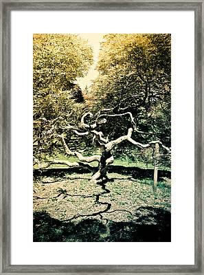 Japanese Threadleaf Framed Print by Colleen Kammerer