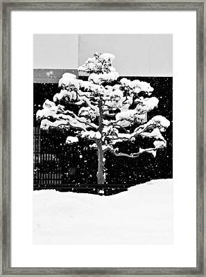 Japanese Tree In The Snow Framed Print