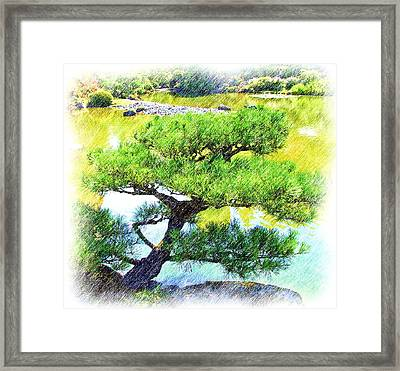 Japanese Tree Framed Print by Ralph Liebstein