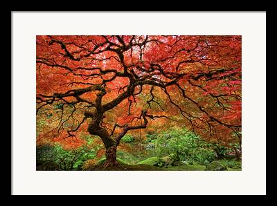 Red Leaf Framed Prints
