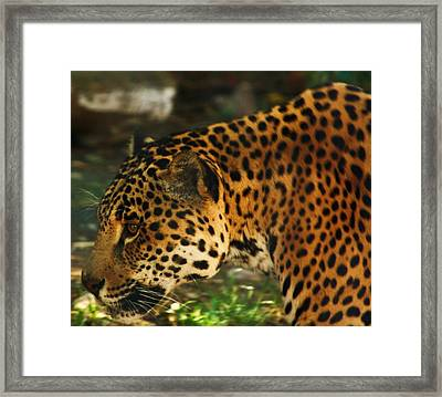 Jaquar 3 Framed Print by Russell  Barton