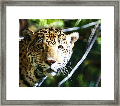 Jaquar Framed Print by Russell  Barton