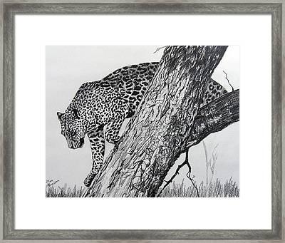 Jaquar In Tree Framed Print by Stan Hamilton