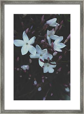 Jasmine Dream- Photography By Linda Woods Framed Print