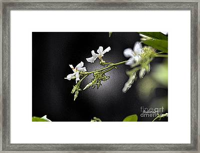 Jasmine In The Dark Framed Print