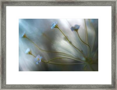 Jasmine Framed Print by Mandy Disher