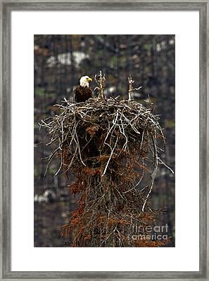 Jasper Bald Eagle Nest Framed Print