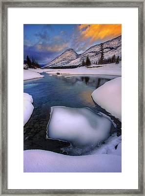 Jasper In The Winter Framed Print