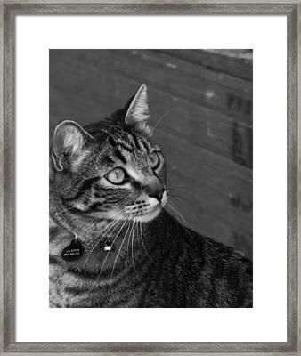 Jasper Framed Print by Jan  Tribe