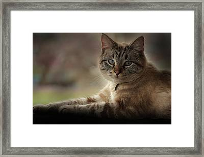 Framed Print featuring the photograph Jaspurr by Kim Henderson