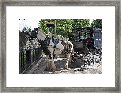 Jaunting Cart Killarney Ireland Framed Print by Cindy Murphy - NightVisions