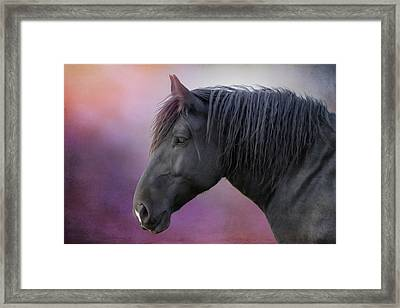 Framed Print featuring the photograph Jay by Debby Herold