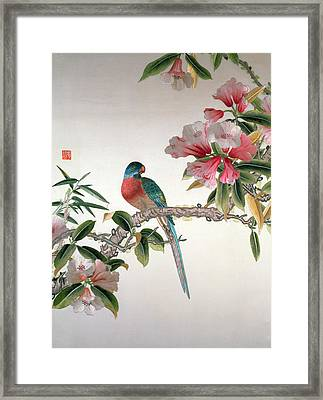 Jay On A Flowering Branch Framed Print