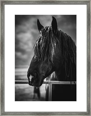 Jay The Rasta Horse Framed Print