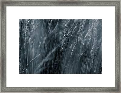 Jazz Grass -  Framed Print