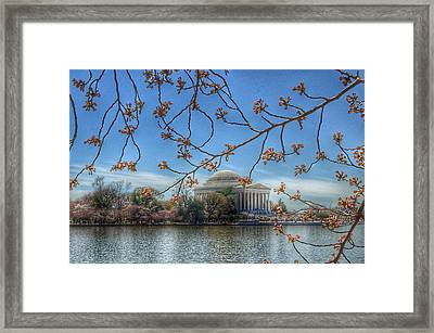 Jefferson Memorial - Cherry Blossoms Framed Print by Marianna Mills