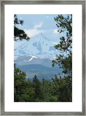 Framed Print featuring the photograph Jefferson Pines by Laddie Halupa
