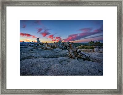 Jeffrey Pine Dawn Framed Print