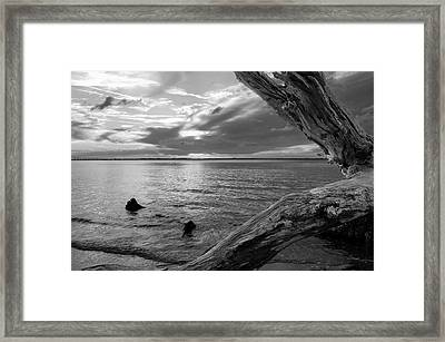 Jekyll Driftwood At Sunset In Black And White Framed Print