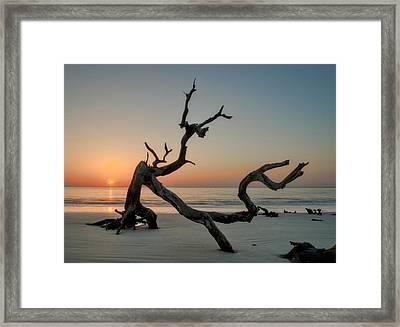 Jekyll Island Driftwood Framed Print
