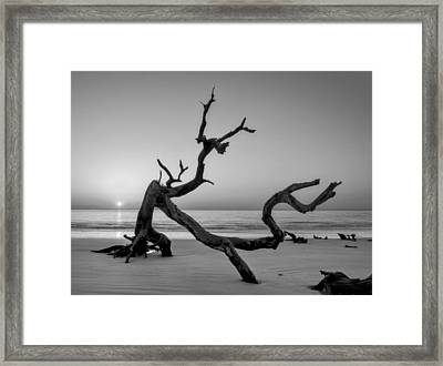 Jekyll Island Driftwood In Black And White Framed Print