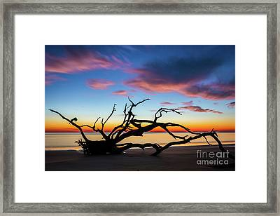 Jekyll Island Sunrise On Driftwood Beach Framed Print