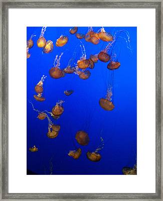 Jelly Fish 1 Framed Print by Dawn Marie Black