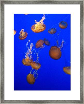 Jelly Fish 2 Framed Print by Dawn Marie Black