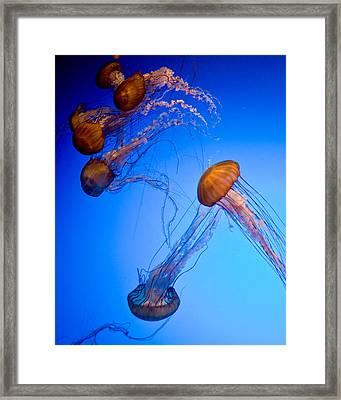 Jelly Fish Iv Framed Print by James Dricker