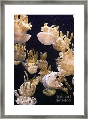 Jelly Parade Framed Print