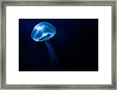 Jelly Framed Print by Tim Nichols