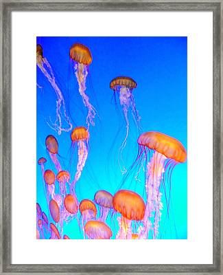 Jellyfish Framed Print by Cindy Wright