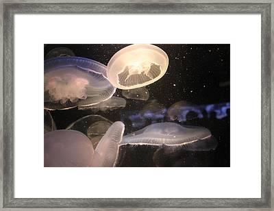 Jellyfish Framed Print by Cory Bykoski