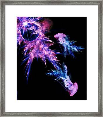 Jellyfish Framed Print by Courtney Averett