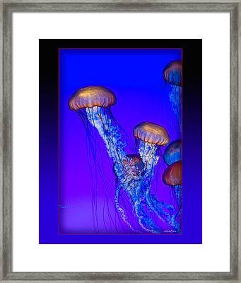 Jellyfish Floating Up Framed Print