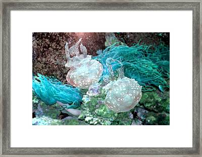 Jellyfish In Aquarium Framed Print