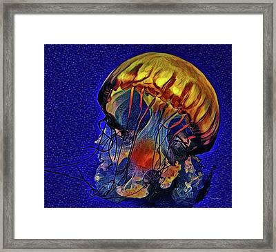 Jellyfish In La Jolla Framed Print by Russ Harris