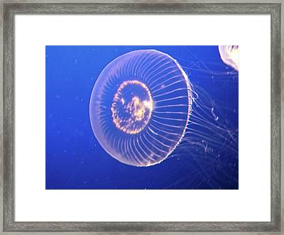 Jellyfish Iv Framed Print